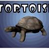 My Aura: Tortoise